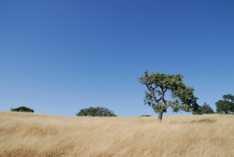 price-ranch-landscapes-001